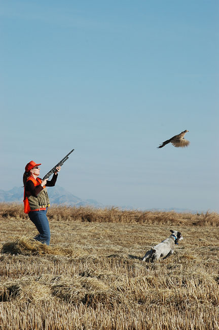 Pheasant Hunting on Wilderness Unlimited property near Williams, CA